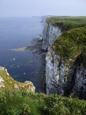 Bempton Cliffs Bird Sanctuary home to Puffins, Gannets, Razorbills and many more birds.