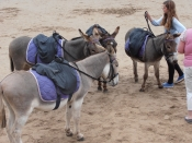 Donkey Rides on Filey Beach