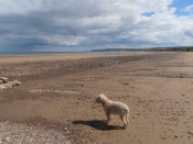 Roobarb with the whole beach to herself